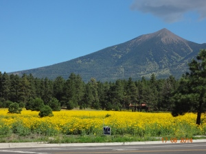Flagstaff-AZ, day 16.